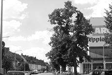 Schleifweg (5),  2010