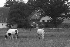 Pferde bei Pillenreuth,  2010